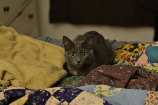 Beluga Kitten | Pumpkin Honey